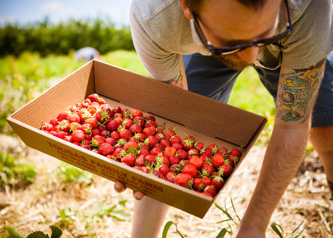 Tougas Farm – Strawb Pickin