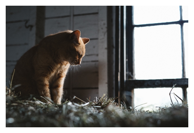 Barn Cat, Gathering Farm